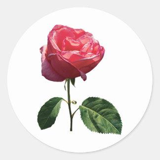 Delicate Pink Rosebud Classic Round Sticker