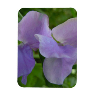 Delicate Purple Sweet Pea Magnet