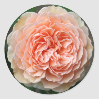 Delicate Rose Sticker