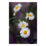Delicate Spring Wildflowers poster