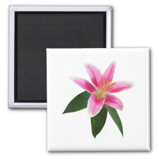 Delicate Stargazer Lily Square Magnet