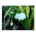 Delicate White Alleghany Spurge Flowers
