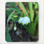 Delicate White Alleghany Spurge Flowers Mouse Mats