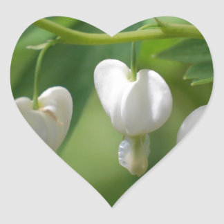Delicate White Bleeding Heart Heart Sticker