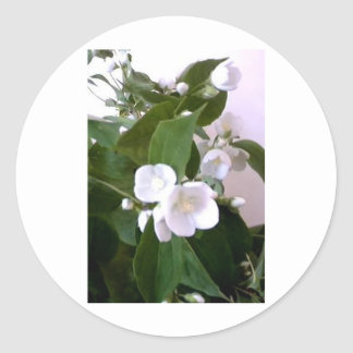 Delicate White Flowers from Nature Stickers
