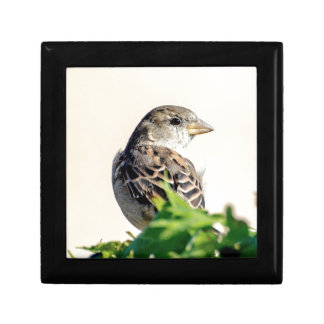 Delightful Bird Photograph Gift Box