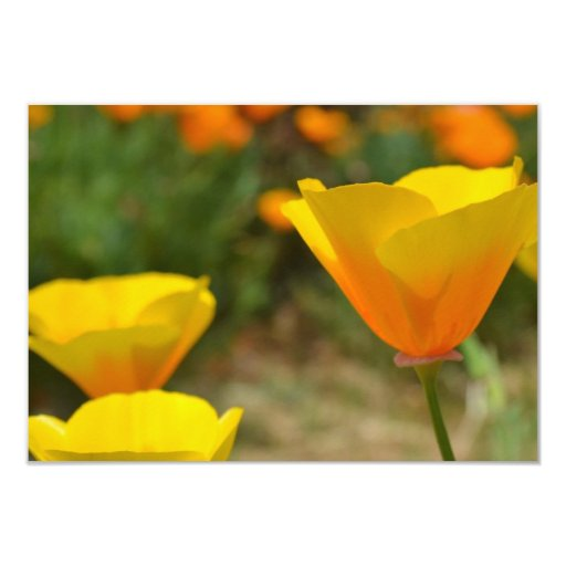 Delightful Spring R.S.V.P. 9 Cm X 13 Cm Invitation Card