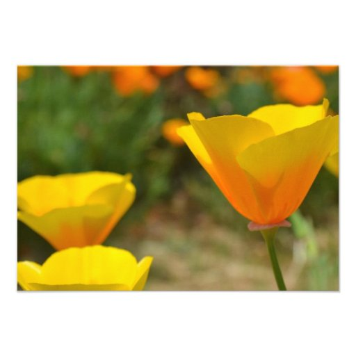 Delightful Spring R.S.V.P. Personalized Invites