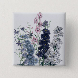 Delphiniums, from 'The Ladies' Flower Garden' 15 Cm Square Badge
