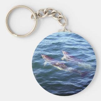 Delphinus delphis key ring