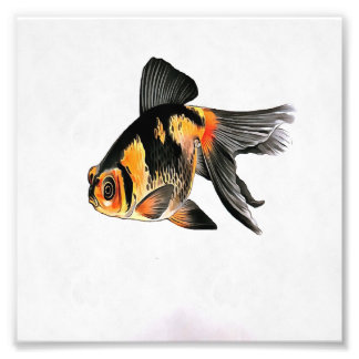 Demekin Goldfish Isolated Photo Print