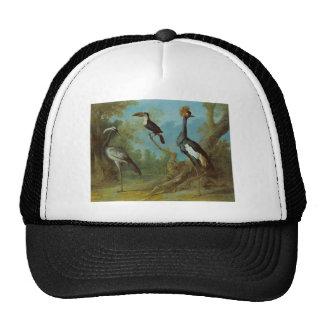 Demoiselle Crane, Toucan, and Tufted Crane Cap