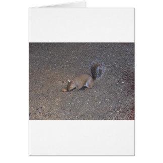 Demon Squirrel Card