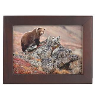 Denali Brown Bear Keepsake Box