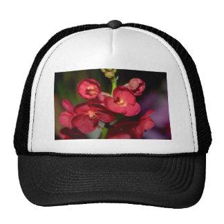 Dendrobium flowers hats