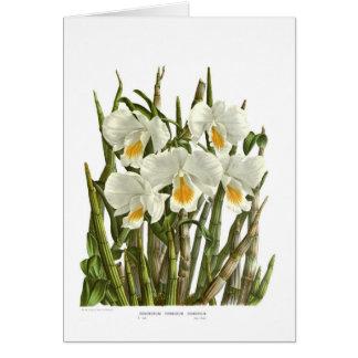 Dendrobium formosum giganteum card