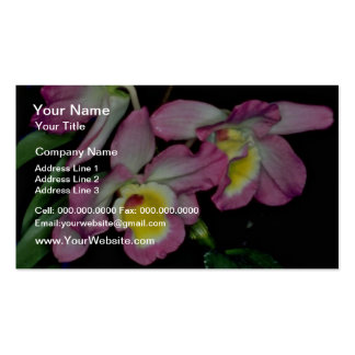 Dendrobium nobile  flowers business card template