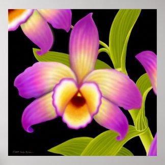 Dendrobium Nobile Orchid Print
