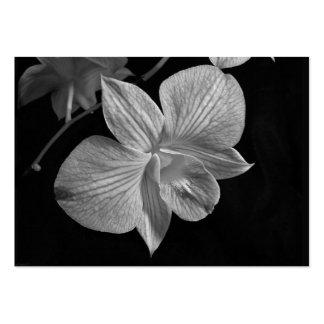 Dendrobium Orchid Blossom ATC Card Business Card