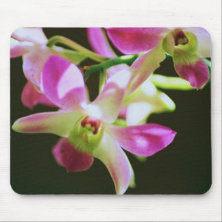 dendrobium orchid mouse pad