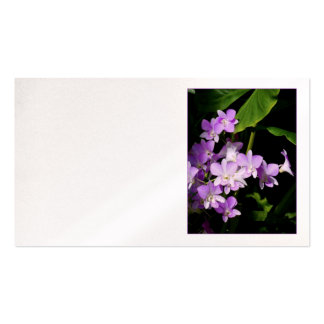 Dendrobium Orchids Business Card Templates