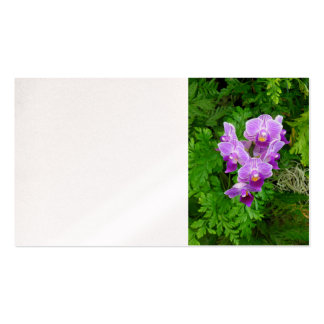 Dendrobium Orchids Business Card