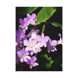 Dendrobium Orchids Gallery Wrapped Canvas