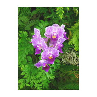 Dendrobium Orchids Canvas Print