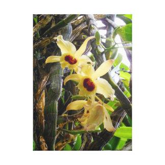 Dendrobium Orchids Canvas Prints