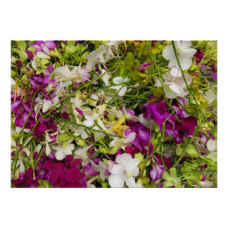 Dendrobium Orchids Poster