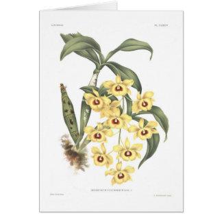 Dendrobium suavissimum greeting card