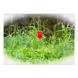 Denmark Tulip Greeting Card