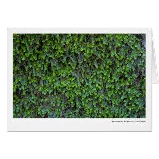 Dense moss, Frontenac State Park Card