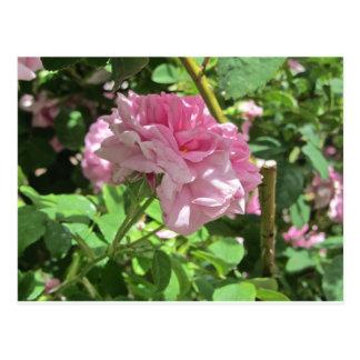 Denver Botanical Gardens Collection Postcard