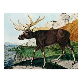 Der Elch or The Elk (1886) Postcard