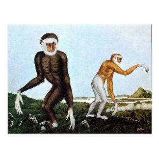 Der Gibbon or The Gibbon (1833) Postcard