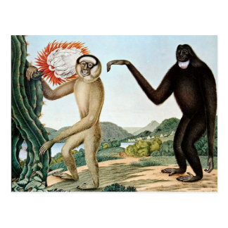 Der Hulock or The Hoolock Gibbon (1835) Postcard