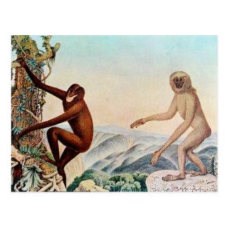 Der Siamang or The Siamang Gibbon (1883) Postcard