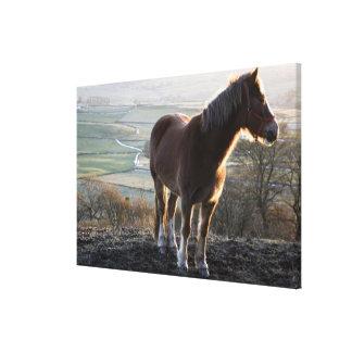 Derbyshire, England Canvas Print