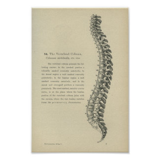 Description of the Vertebral Column Poster
