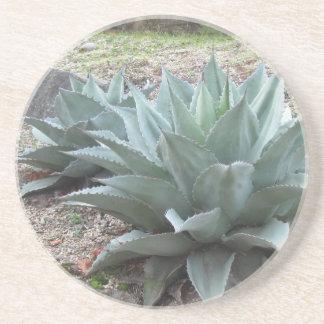 Desert Agave Plants Coaster