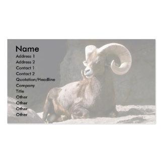Desert bighorn sheep (Adult ram bedded down in sun Pack Of Standard Business Cards
