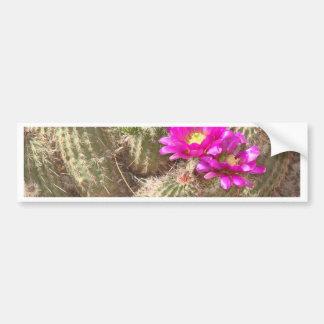 Desert bloom bumper stickers