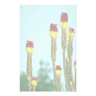 Desert bloom, outside Phoenix, Arizona, U.S.A. Stationery Design