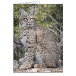 Desert Bobcat Card