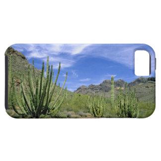 Desert cactus at Organ Pipe National Monument, iPhone 5 Case