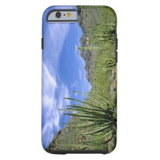 Desert cactus at Organ Pipe National Monument, Tough iPhone 6 Case