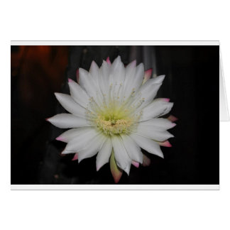 Desert Cactus Bloom Note Card