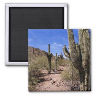 Desert Cactus in Arizona Magnet