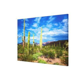 Desert cactus landscape, Arizona Canvas Print